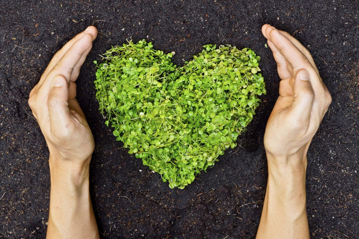 hands holding green heart-shaped tree to illustrate Browns eco-friendly cleaning